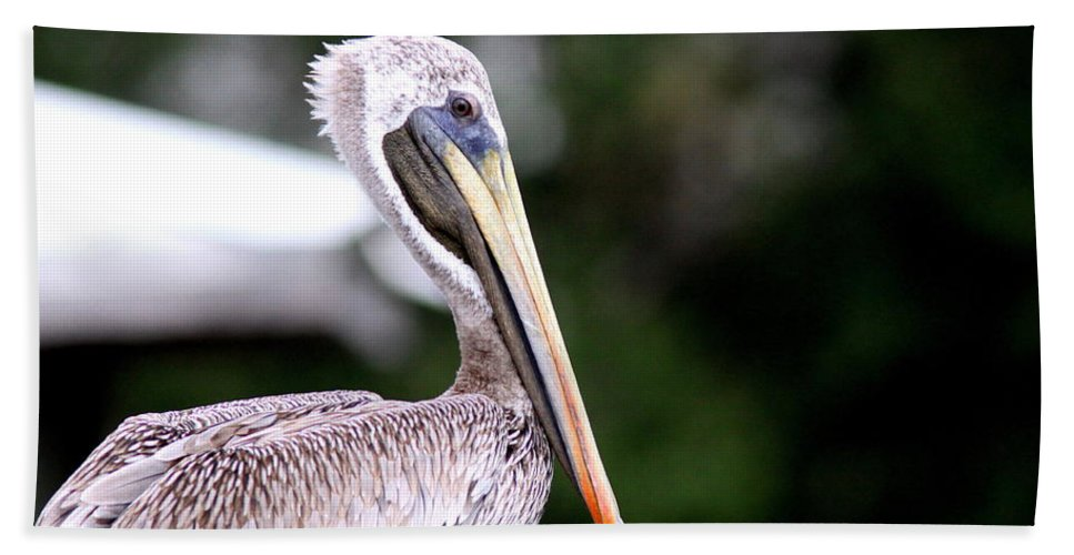 Brown Pelican Bath Sheet featuring the photograph Ugly Beauty - Brown Pelican by Travis Truelove