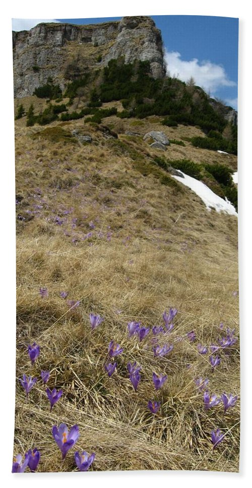 Crocus Hand Towel featuring the photograph Up by Alina Cristina Frent