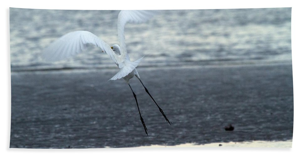 Egret Bath Sheet featuring the photograph Up And Away by Karol Livote