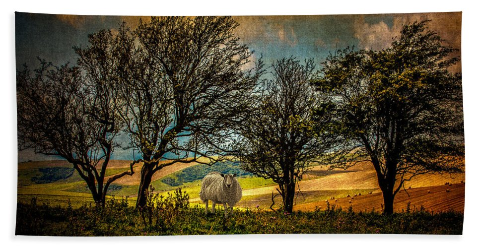 Sheep Hand Towel featuring the photograph Up On The Sussex Downs In Autumn by Chris Lord