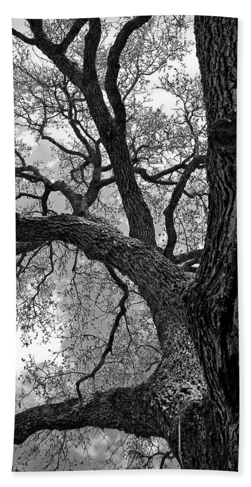 Abstract Bath Sheet featuring the photograph Up Tree by Sean Wray