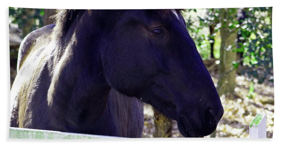 Horse Bath Sheet featuring the photograph Upclose And Personal by La Dolce Vita