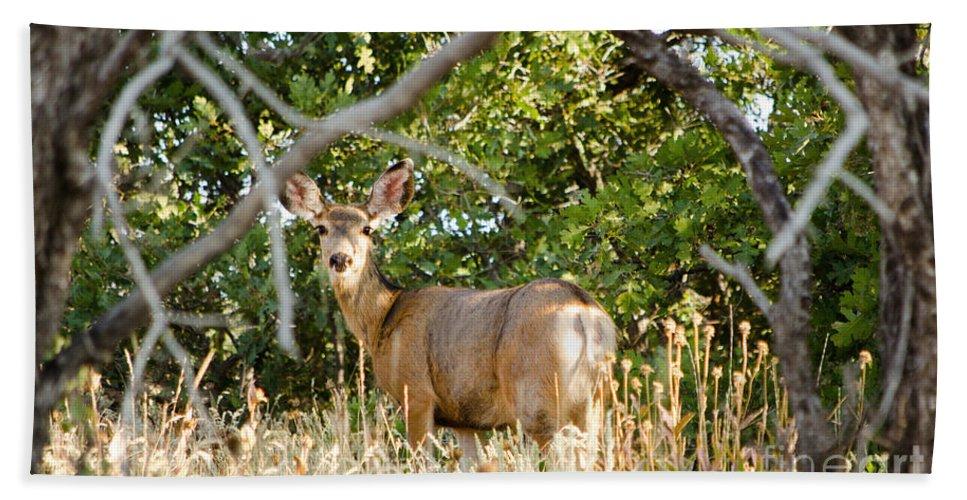 Deer Bath Sheet featuring the photograph Utah Mule Deer by Donna Greene