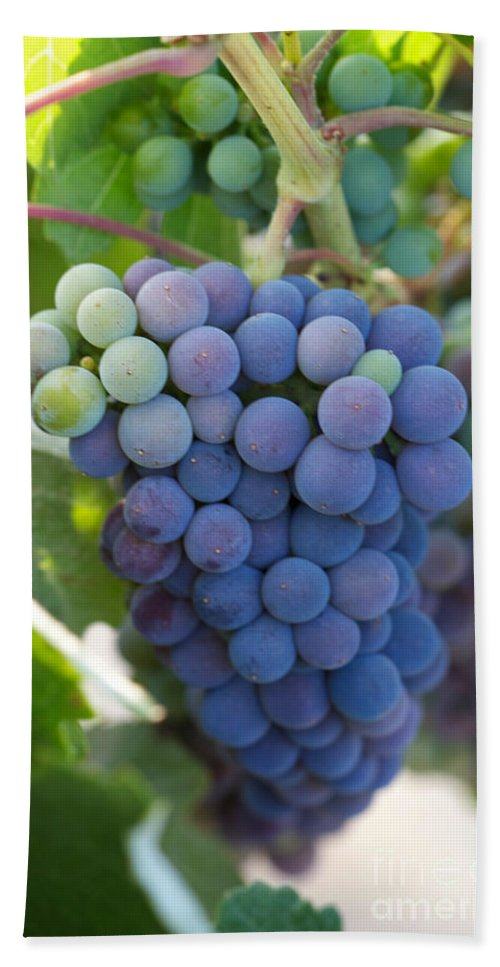 Red Grapes Bath Sheet featuring the photograph Vine Ripe by Brooke Roby