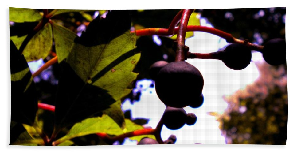 Berries Bath Sheet featuring the photograph Virginia Creeper Fruit by Renate Nadi Wesley