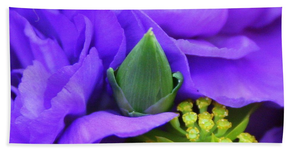 Purple Flower Hand Towel featuring the photograph Vivacious by Matthew Wilson