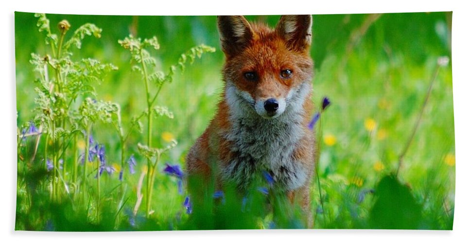 Fox Hand Towel featuring the photograph Vixen In Bluebells by Gavin Macrae