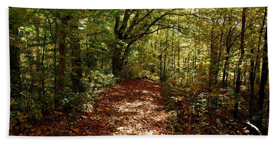 Usa Bath Sheet featuring the photograph Walk In The Woods by LeeAnn McLaneGoetz McLaneGoetzStudioLLCcom