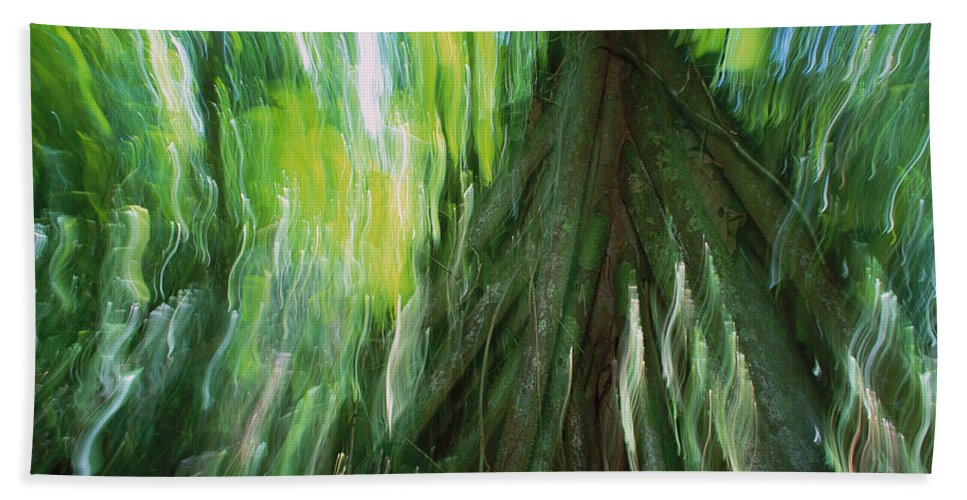 Mp Hand Towel featuring the photograph Walking Palm Socratea Exorrhiza Showing by Christian Ziegler