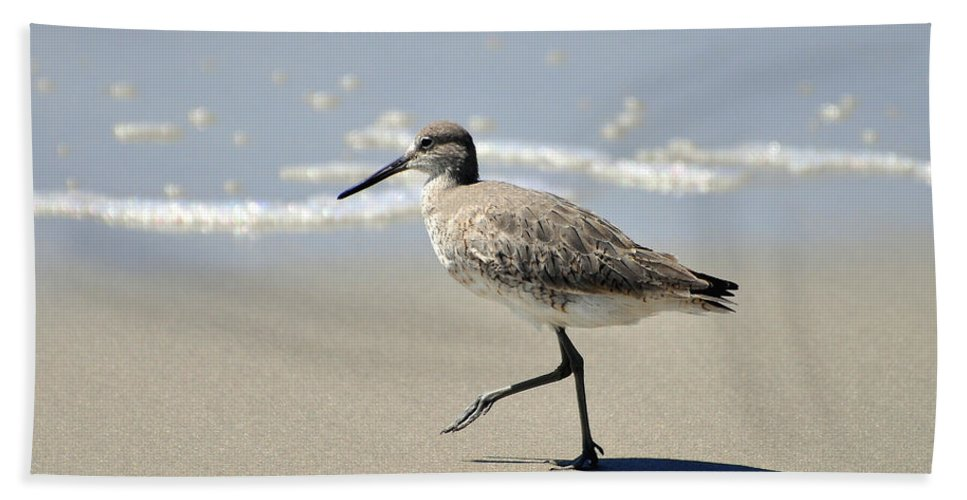 Willet Bath Sheet featuring the photograph Walking Willet by Al Powell Photography USA