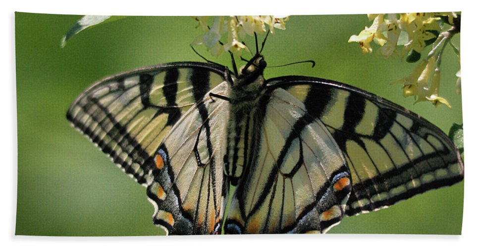 Nature Bath Sheet featuring the photograph Warpaint by Susan Capuano