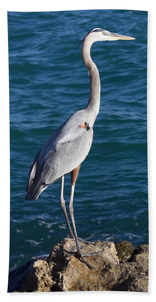 Great Blue Heron Bath Sheet featuring the photograph Watching For Fish by Sally Weigand