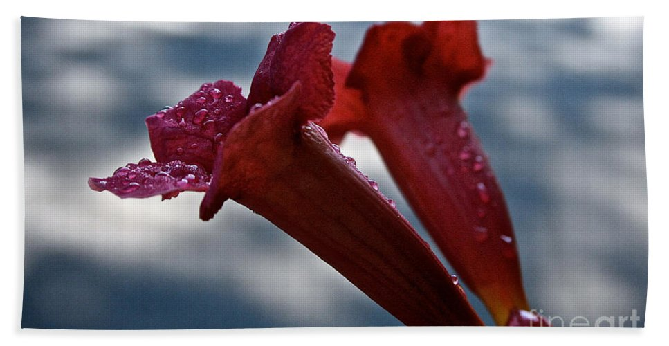 Plant Bath Sheet featuring the photograph Water Beaded Trumpets by Susan Herber