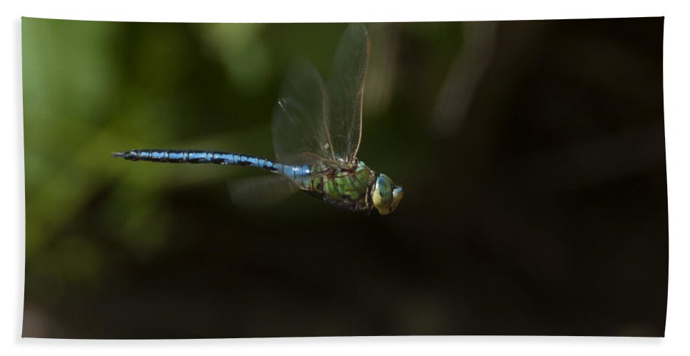 Dragon Fly Hand Towel featuring the photograph Water Chaser by Focus Fotos