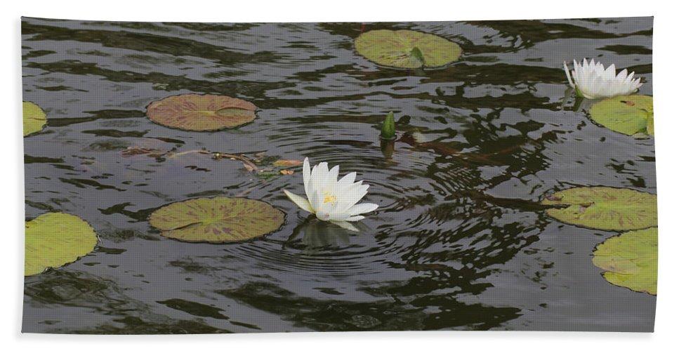 Water Circles On The Lily Pond Bath Sheet featuring the photograph Water Circles On The Lily Pond by Douglas Barnard