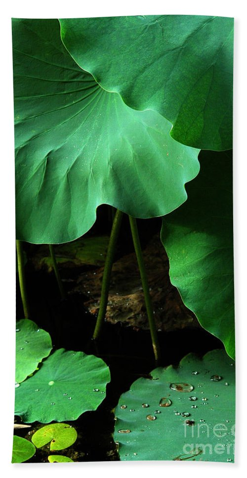 Water Bath Sheet featuring the photograph Water Lilies Of Green by Mike Nellums