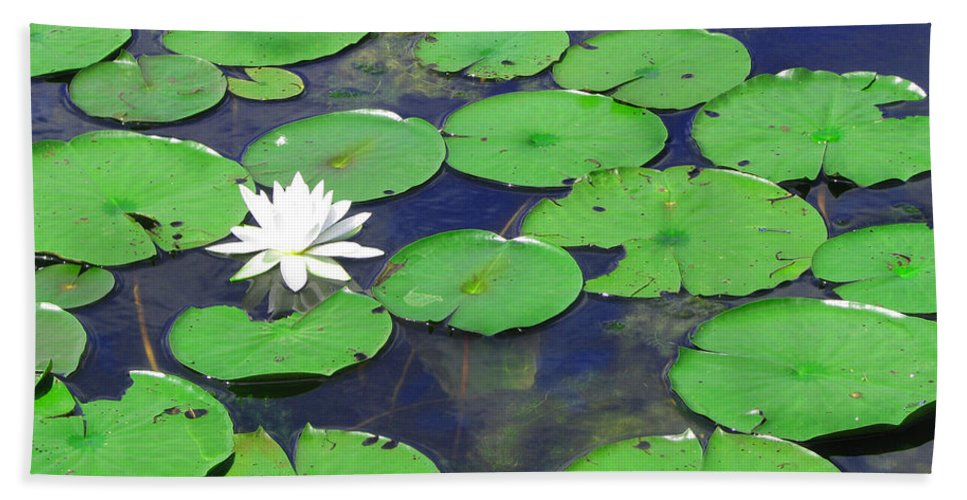 Water Lily Bath Sheet featuring the photograph Water Lily by Clara Sue Beym