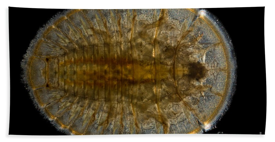 Aquatic Hand Towel featuring the photograph Water Penny Beetle Larva by Ted Kinsman