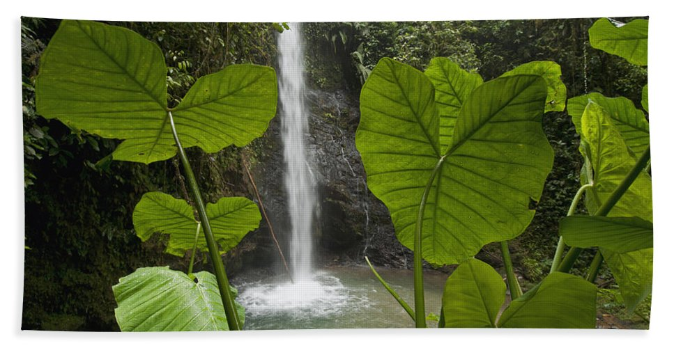 Mp Hand Towel featuring the photograph Waterfall In Lowland Tropical Rainforest by Murray Cooper