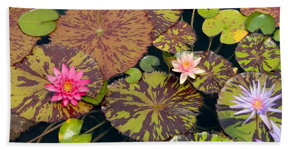 Flora Hand Towel featuring the photograph Waterlilies In A Garden Pool by Ted Kinsman