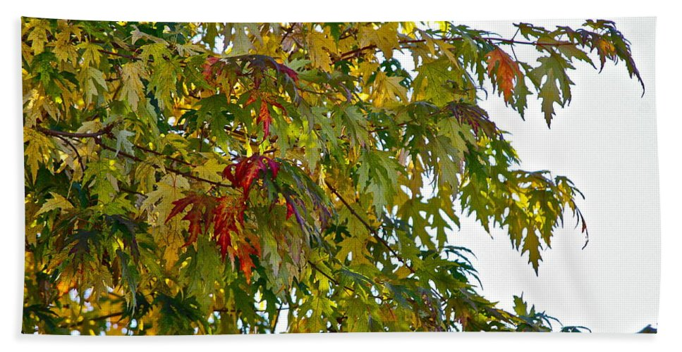 Tree Bath Sheet featuring the photograph Welcome Sight by Diana Hatcher