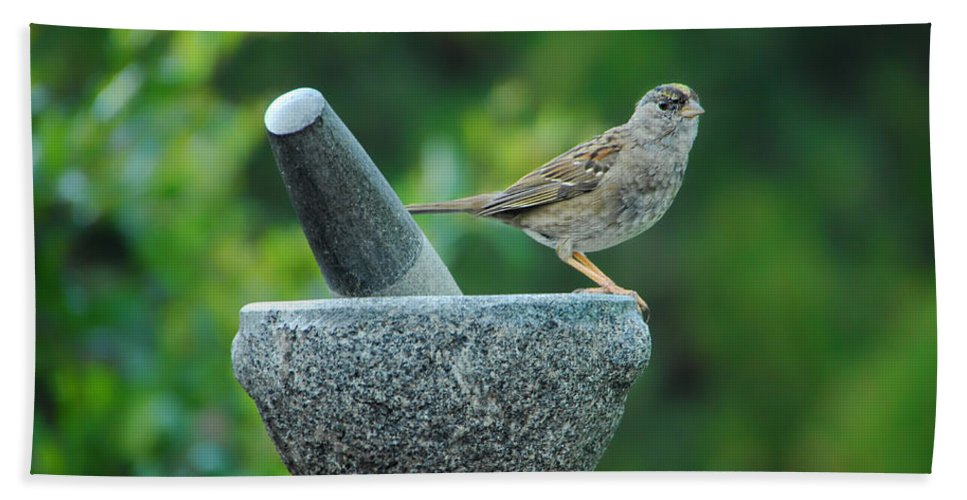 Sparrow Bath Sheet featuring the photograph Well Grounded by Donna Blackhall