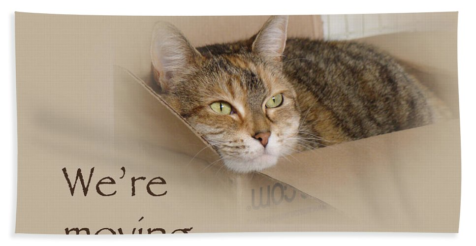 Moving Bath Sheet featuring the photograph We're Moving Notification Greeting Card - Lily The Cat by Mother Nature
