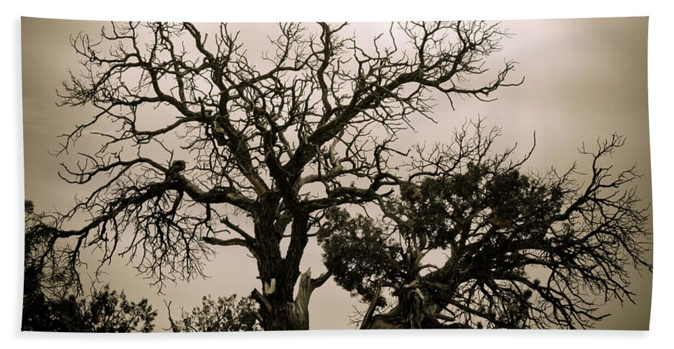 Nature Bath Sheet featuring the photograph Western Winter Tree by Marilyn Hunt