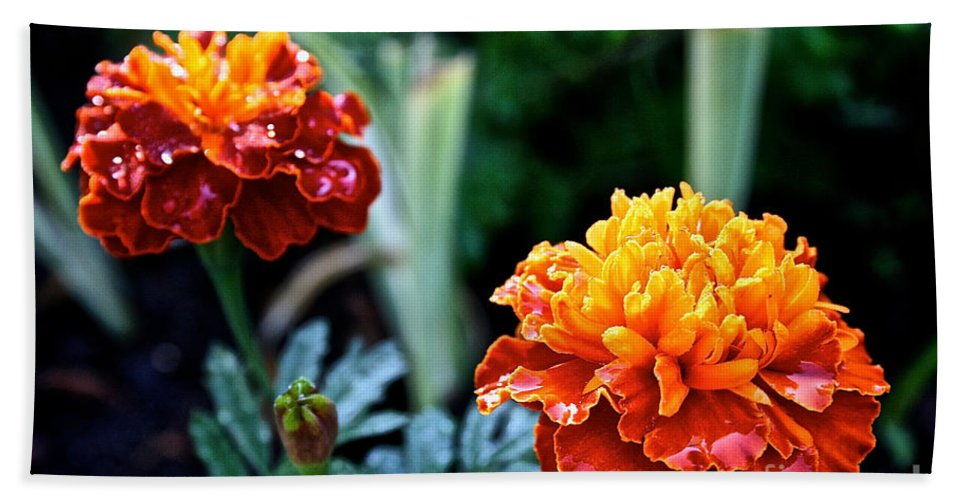 Plant Bath Sheet featuring the photograph Wet Marigolds by Susan Herber