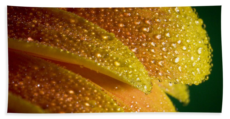 Abstract Bath Sheet featuring the photograph Wet Pettals by Nathan Wright