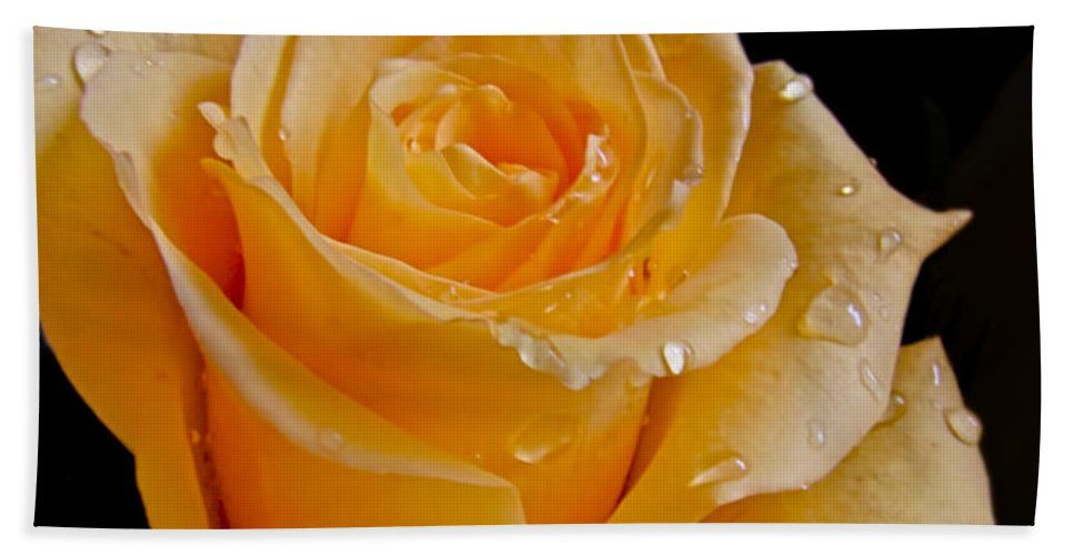 Bath Sheet featuring the photograph Wet Yellow Rose by Debbie Portwood