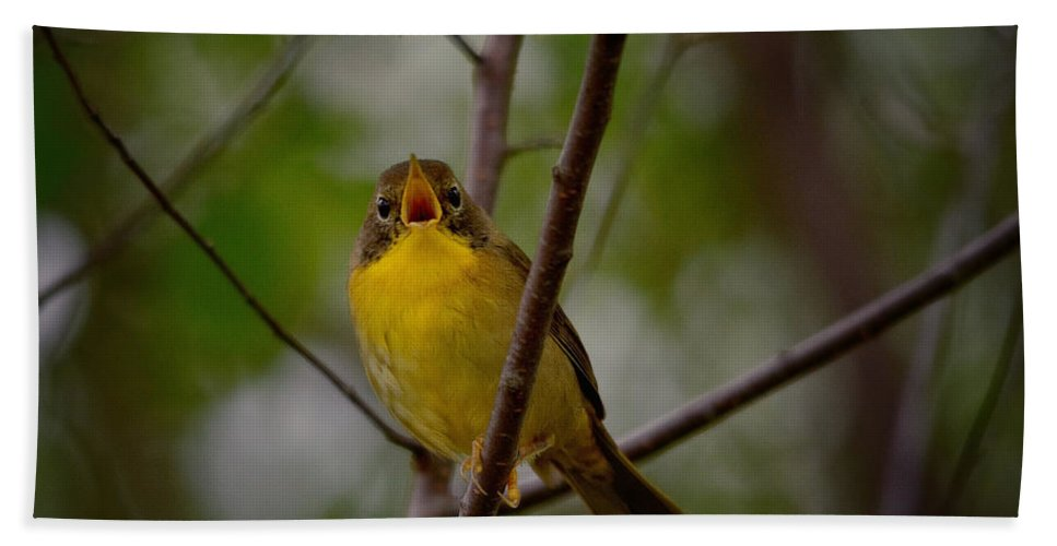 Yellow Warbler Bath Sheet featuring the photograph What Warblers Do by Susan Capuano