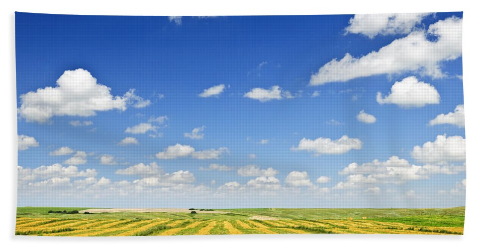 Agriculture Hand Towel featuring the photograph Wheat Farm Field At Harvest by Elena Elisseeva