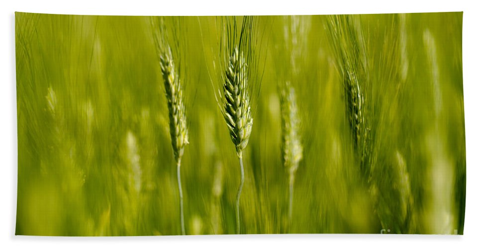 Wheat Hand Towel featuring the photograph Wheat On The Field by Mats Silvan