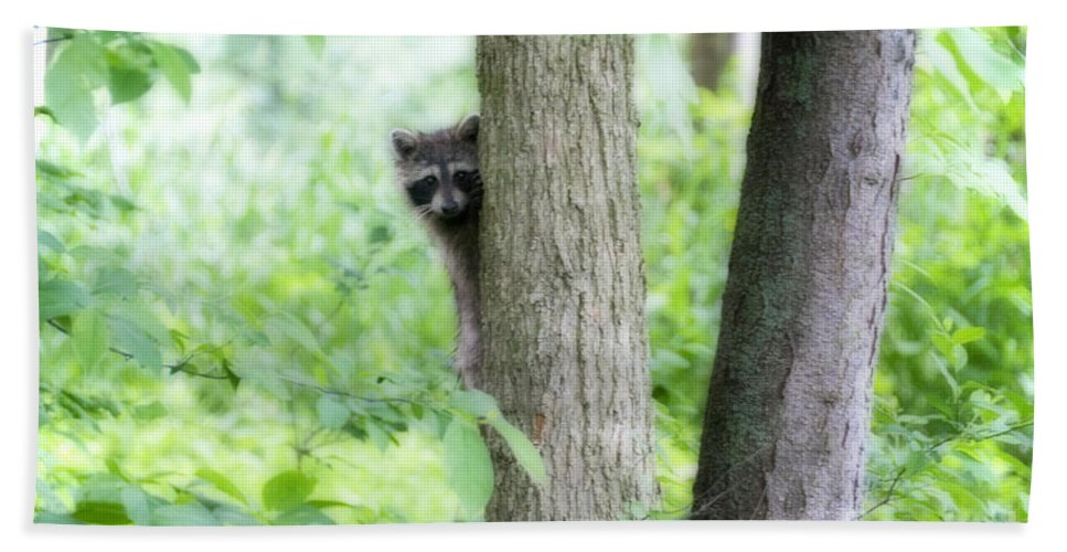 Raccoon Hand Towel featuring the photograph When Raccoon Dream by David Arment
