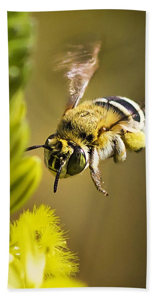 Bumble Bee Bath Sheet featuring the photograph Where Is It by Ronel Broderick
