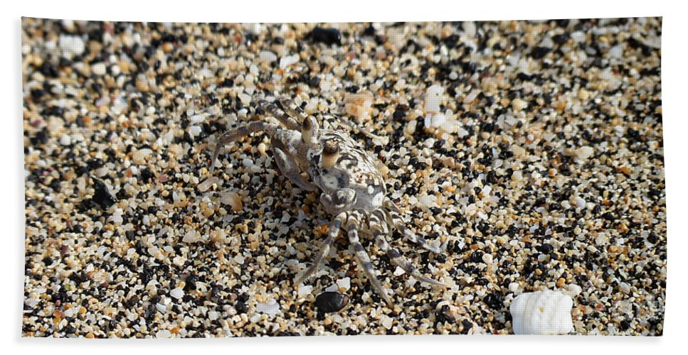 Crab Hand Towel featuring the photograph Where's The Crab by Elizabeth Harshman