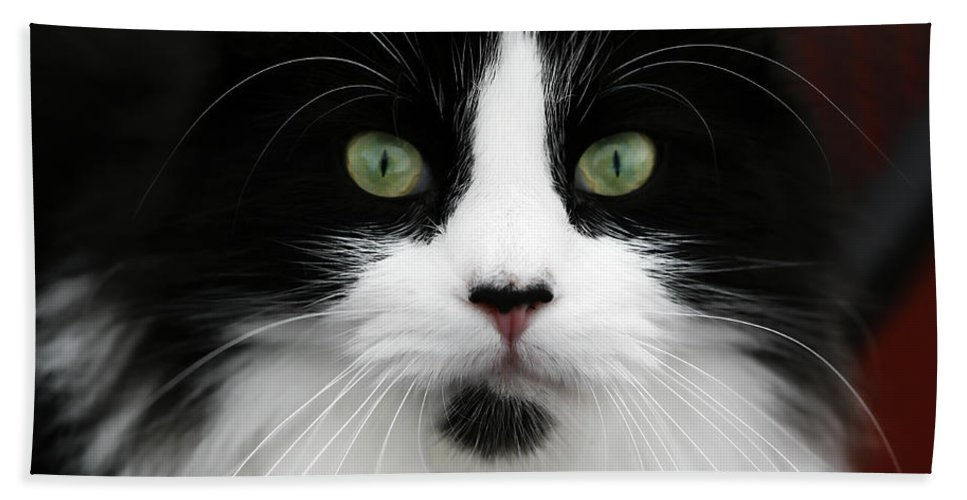 Whiskers Bath Sheet featuring the photograph Whiskers by Marilyn Hunt