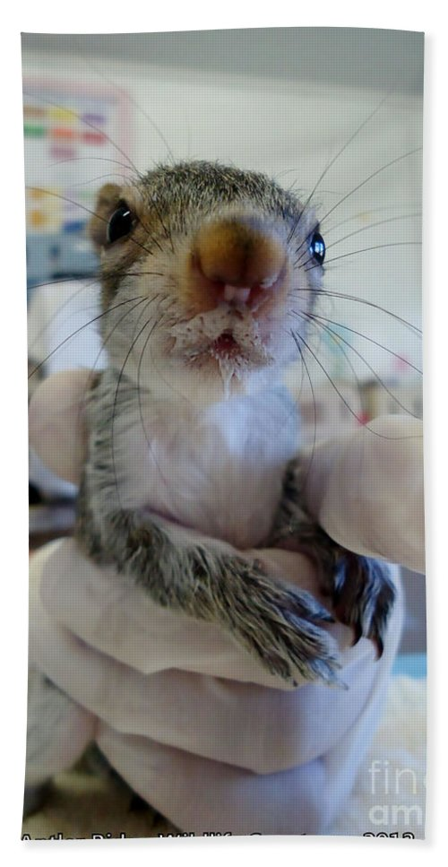 Squirrel Hand Towel featuring the photograph Whiskers by Art Dingo