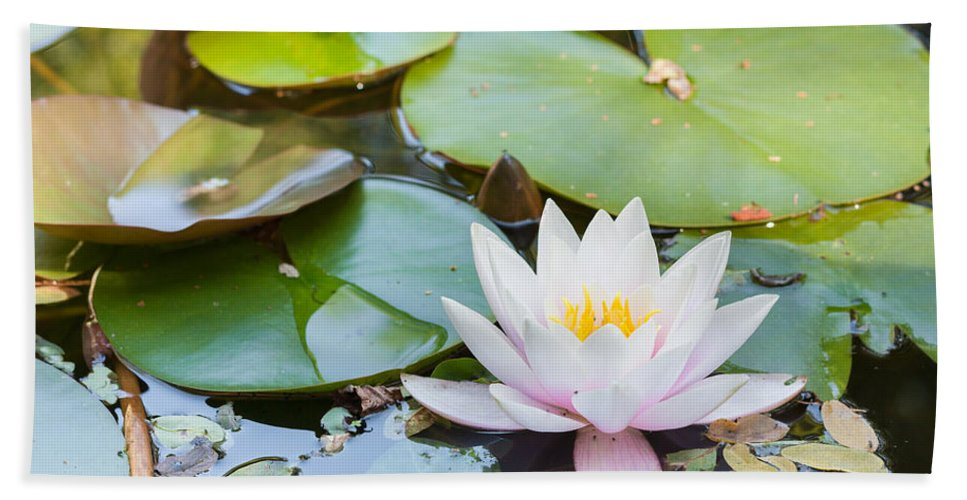Asian Bath Sheet featuring the photograph White And Pink Water Lily by Semmick Photo