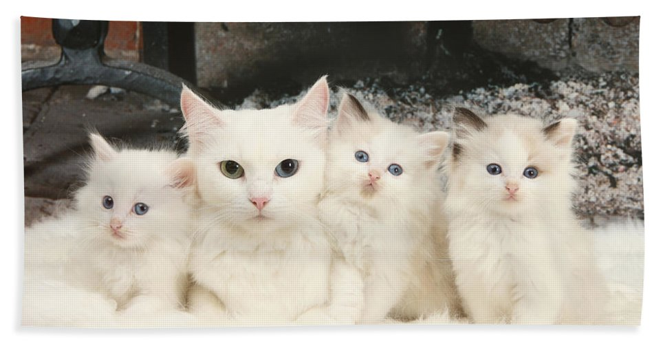 Animal Hand Towel featuring the photograph White Cats by Mark Taylor