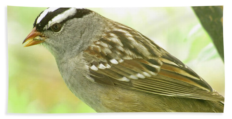 Nature Bath Sheet featuring the photograph White Crowned Sparrow by Debbie Portwood