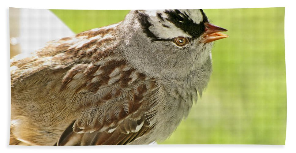 Nature Bath Sheet featuring the photograph White Crowned Sparrow II by Debbie Portwood