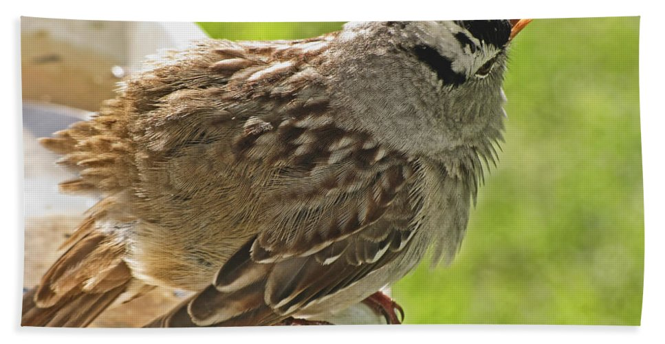 Nature Bath Sheet featuring the photograph White Crowned Sparrow Sends A Warning by Debbie Portwood