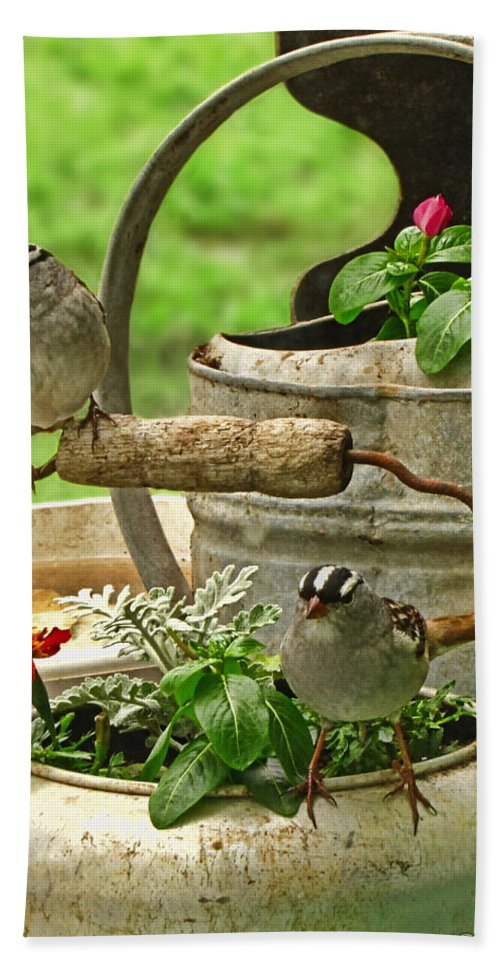 Nature Bath Sheet featuring the photograph White Crowned Sparrows On The Flower Pot by Debbie Portwood