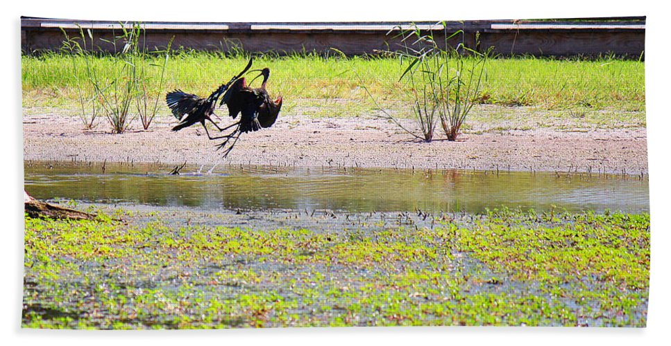 Roena King Bath Sheet featuring the photograph White Faced Ibis 15 Minute War by Roena King
