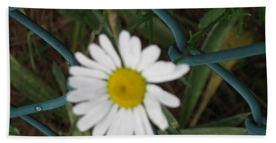 Enterprisingness Hand Towel featuring the photograph White Flower On The Fence by Sonali Gangane