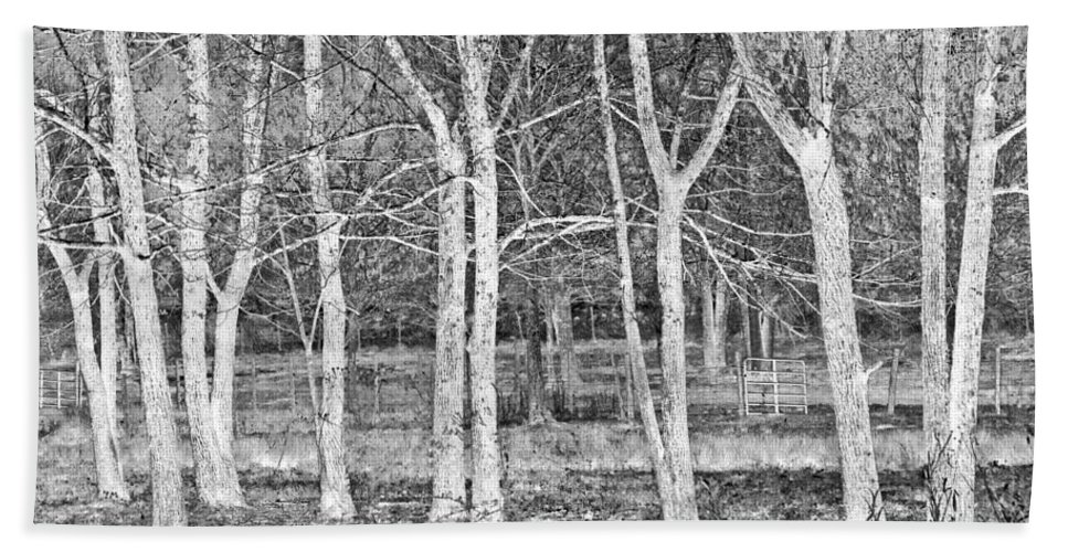 Apalachia Hand Towel featuring the photograph White Grove by Debra and Dave Vanderlaan