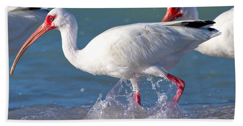 Coquina Bath Sheet featuring the photograph White Ibis On The Shore by Betsy Knapp