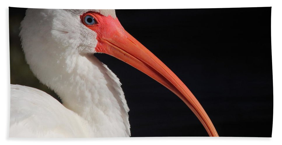 White Bath Sheet featuring the photograph White Ibis Portrait by Bruce J Robinson